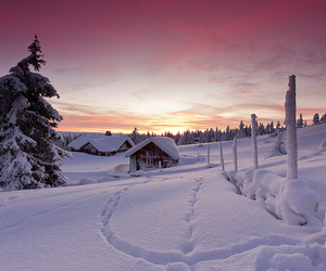 cold, forest, and home image