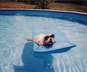dog and pool image