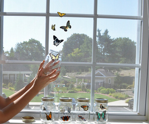 butterfly, window, and freedom image