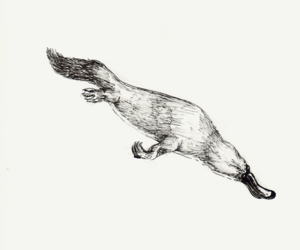 draw and Platypus image