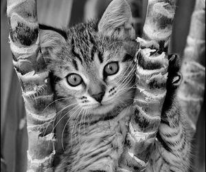 animals, beauty, and black and white image