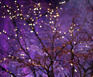 light, tree, and purple image