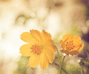 bokeh, flower, and nature image