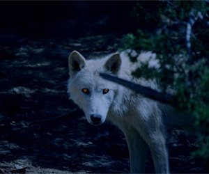 wolf, leaves, and white image
