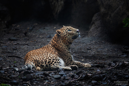 Captive-by-kiran-ghadge-india_large