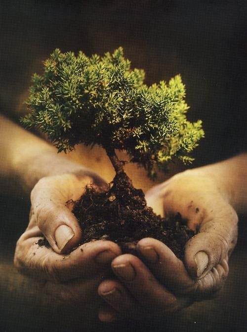 Hasil carian imej untuk weheartit tree