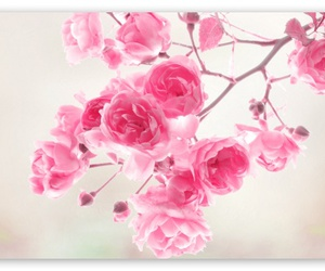 beuatiful, flower, and color image