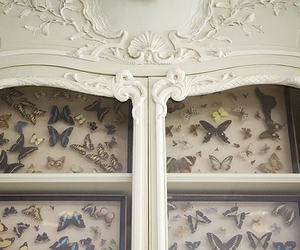 butterfly, cabinet of curiosities, and photo image