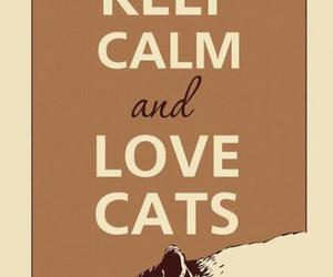 cat, animals, and keep calm and image