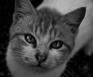 black and white, cat, and cute image