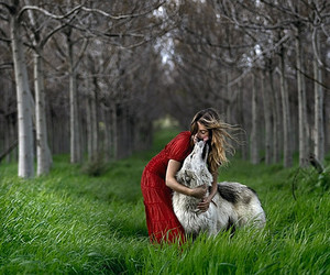 wolf, red, and nature image