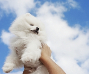dog, head in the clouds, and happiness image