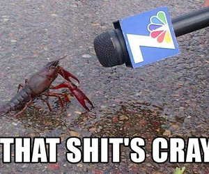 funny and crayfish image