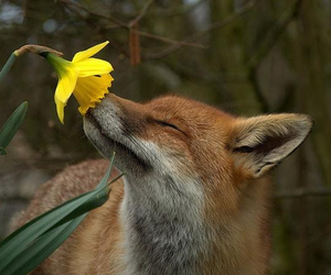 fox, photography, and cute image