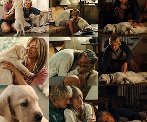 dog, marley, and marley and me image