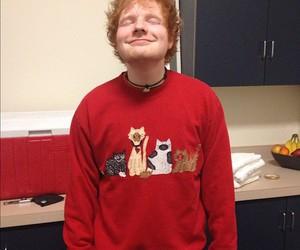 ed sheeran, cat, and ed image