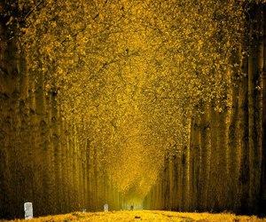 beautiful, lars, and trees image