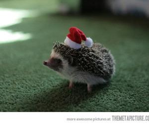 cute, hedgehog, and christmas image