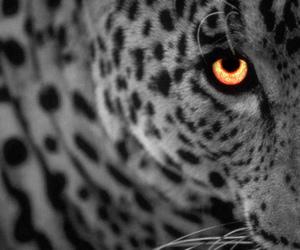 wild life image