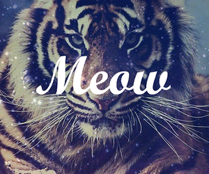meow, tiger, and animal image