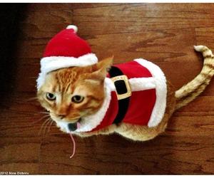cat, Nina Dobrev, and santa claus image