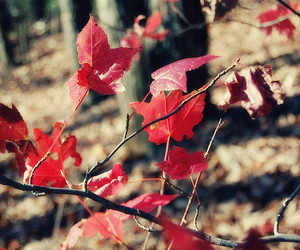 autumn, leaf, and red image