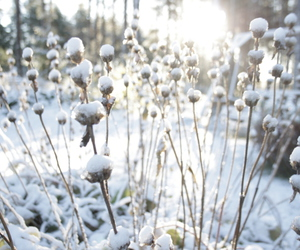 light, nature, and winter image
