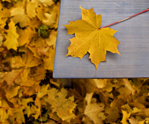 fall, leaves, and nature image