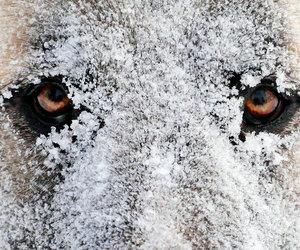 eyes, dog, and snow image