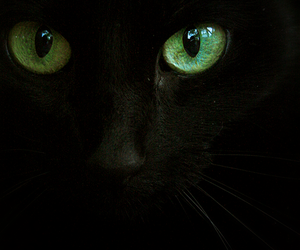 cat, black, and green image