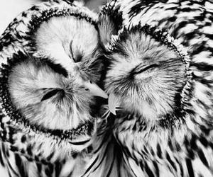 owl, love, and animal image