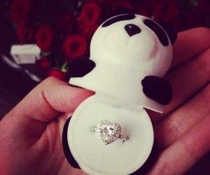 panda and ring image