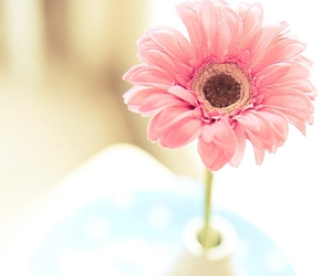 daisy, pink, and flower image