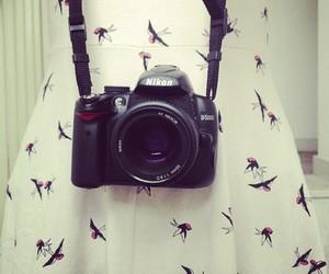 bird, dress, and nikon image