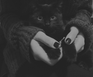 black cat, cat, and photography image