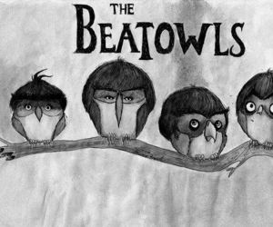 owl, beatles, and the beatles image