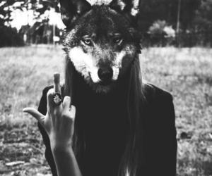 black and white, forest, and wolf image