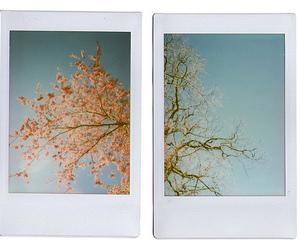 polaroid, tree, and photography image