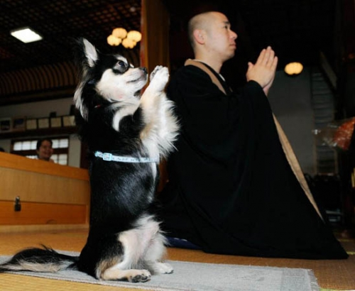 dog, funny, and monk image