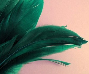 fashion, feather, and feathers image