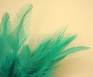 blue, turquoise, and feather image