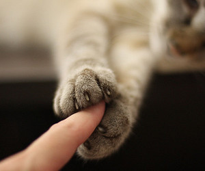 cat and lovely image