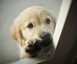 dog, open, and lovely image