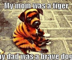dog, tiger, and cute image