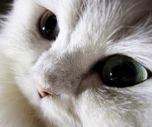 cute, beautiful, and cat image