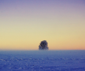 alone, colorful, and tree image