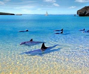 dolphin image