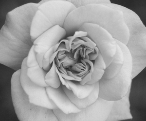 black and white, flower, and beautiful image