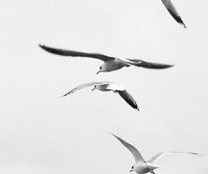 bird and aesthetic image
