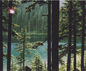 beautiful, woods, and forest image